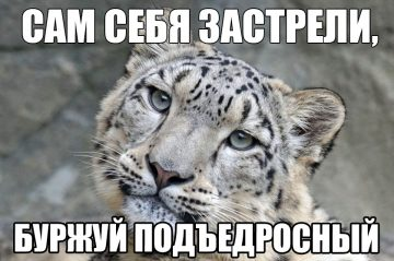 snow-leopard-1990543_1280